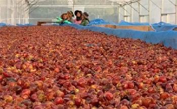 Olam Coffee creates novel superfruit from upcycled cascara