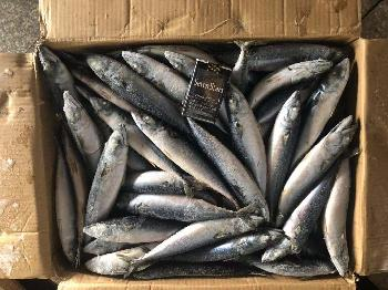 Frozen  mackerel