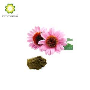 Echinacea purpurea extract 4% Polyphenols