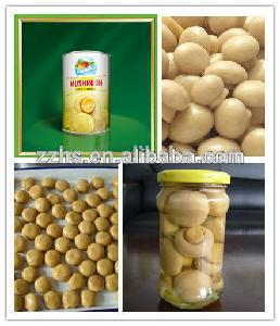 Mushroom Manufacturing Canned Mushroom P n S  Buyers  for  Oyster   Mushrooms