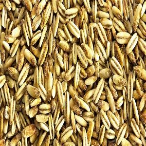 Wholesale best price hulled oats