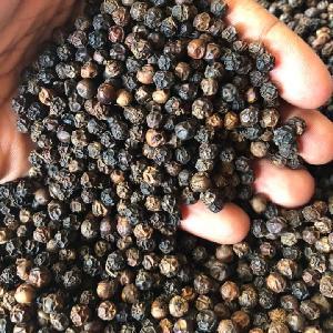 Organic wheat grains Wheat Grains Cereal WHITE WHEAT GRAINS 125 GM