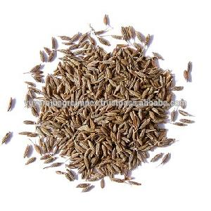 High  Quality   Cumin   Seeds  / Exporters In India To All Gulf Countries