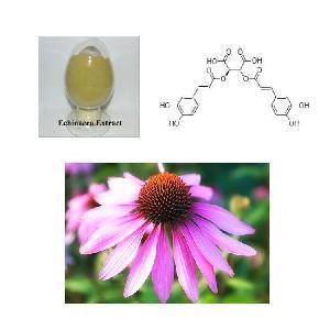 Best Price High Quality Echinacea Purpurea Extract Powder Polyphenols 4%