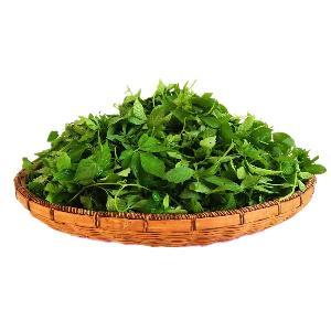 Bulk organic jiaogulan gynostemma pentaphyllum herbal tea