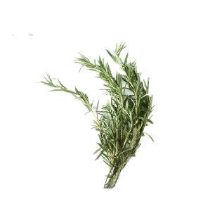 Factory Wholesale Price Rosemary Extract Carnosic Acid