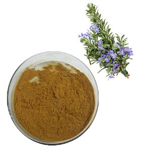 Chinese Dried Herbs Carnosic  Acid   Ursolic   Acid  Rosmarinic  Acid  from  Rosemary  Extract
