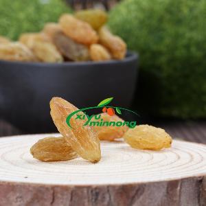 for importers bulk cheap raisins price selected dried  Jumbo  golden raisins from China