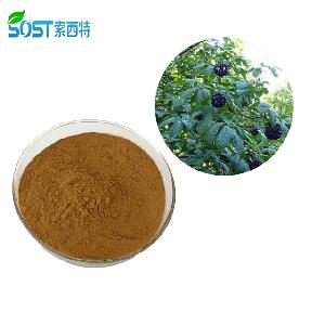 Natural herbal extract acanthopanax senticosus