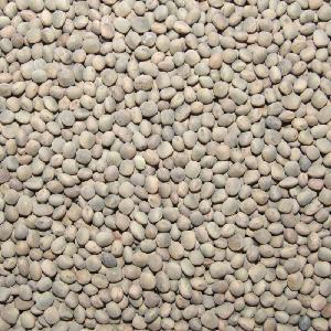 Grey Vetch Peas