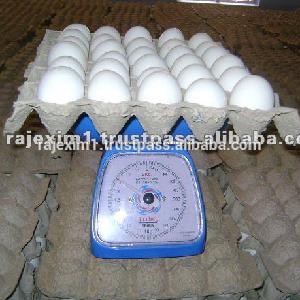 Table Eggs from india