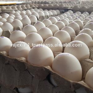 Chicken Egg Supply to bahrain market