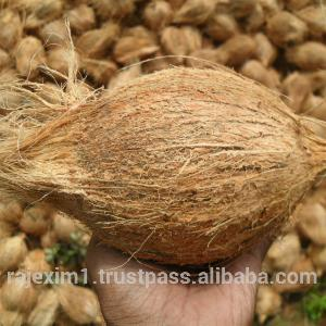 Exporters of Fresh Semi Husked Coconuts