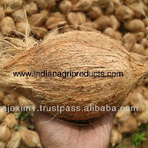 Best Price Of Semi Husked Coconuts