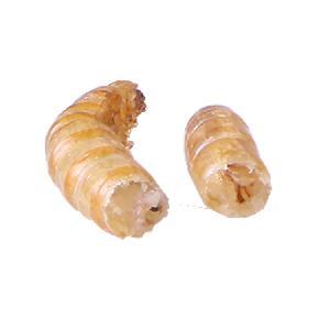 dried mealworm royal canin pet food organic pet food