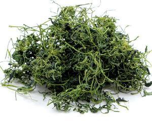 Best selling Chinese  herbal   tea  Jiao Gu Lan  Gynostemma  pentaphyllum  herbal s
