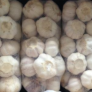 Factory wholesale Fresh Garlic heads low price from China