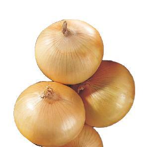 50-90mm Fresh High quality Onions 10kg mesh bag from China