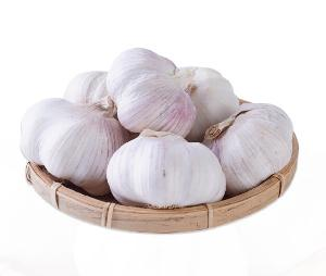 Top Grade Fresh  Garlic   pure   white  Export to Middle East market