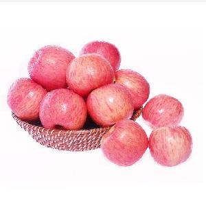 High quality wholesale  Fresh Fuji red Apple for export
