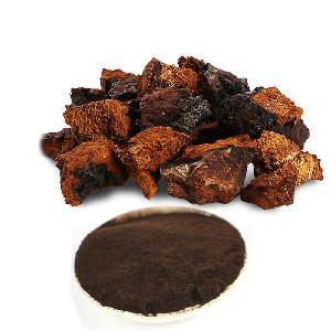New products  Chaga  Inonotus Obliquus Mushroom Extract Powder
