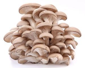 1KG Pleurotus Ostreatus Oyster Mushroom Mycelium Extract Powder Price