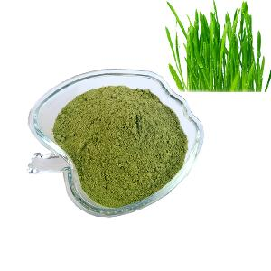 Dehydrated Barley Grass Powder Best Quality