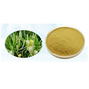 Jin yin hua high quality honeysuckle  extract  5%  chlorogenic   acid