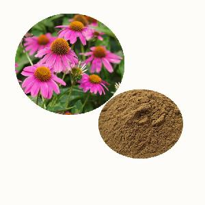 Zi zhui hua coneflower powder echinacea purpurea extract powder