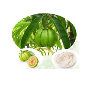 100% Natural garcinia cambogia hca 95% extract hydroxy citric acid powder
