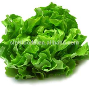 Sheng Cai green Lettuce vegetables Edible Green Seeds