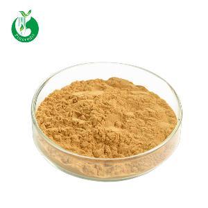 Favorable Natural Herb Ginkgo Biloba Extract