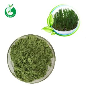 Wholesale Price Bulk  Organic   Barley   Grass  Powder