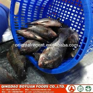 #chinese fish 250-400g frozen  gutted   scaled   tilapia