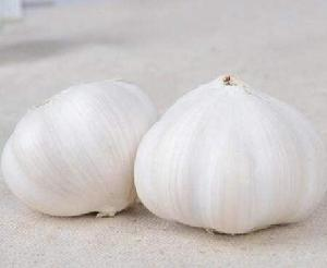 fresh chinese garlic 55cm fresh normal white garlic 2020 new crop