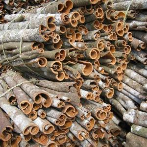 Cinnamon bark is spices and medicinal  herb s bring high  nutritional  value