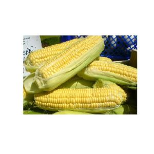 Best price for Frozen boiled sweet corn for sale of Vietnam +84-845-639-639 (Whatsapp)