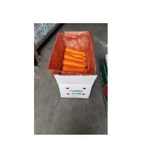 Wholesale organic carrots / Fresh carrots specifiaction
