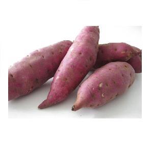 Organic sweet potato with large quantity