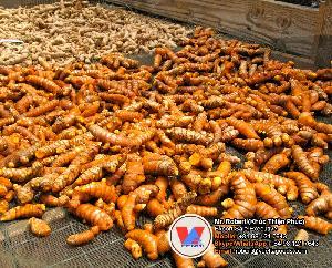 Fresh Curcumin Spice Turmeric Root Seasoning