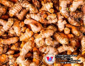 Raw Turmeric Spice Root for Extracting