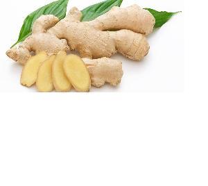 Fresh Ginger- Fresh Ginger Supplier WHATSAPP+84-845-639-639