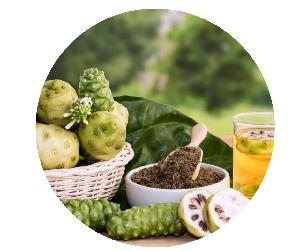 Noni fruit is known as a precious herb often used to make medicine and soak in alcohol very good for//Ms. Clara +84 838879188