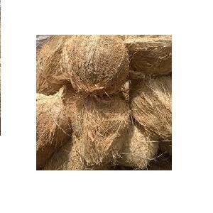 Semi Husked Coconut Vietnam/High Quality/ Ms.Daisy Tran +84 917343549