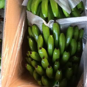 Fresh banana with the best price from Vietnam
