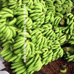 Fresh bananas from Vietnam- High quality Year 2020