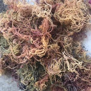 Hot SeaWeed!!! Jenis seaweed with LOWEST price from Viet Nam