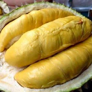 Fresh Durian - Tropical Fruit from Vietnam with Best Price and Quality