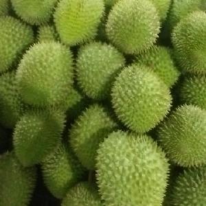 Fresh   Durian  in Viet Nam