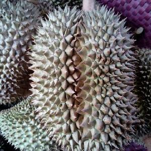 The Fresh Durian Best Seller in Viet Nam